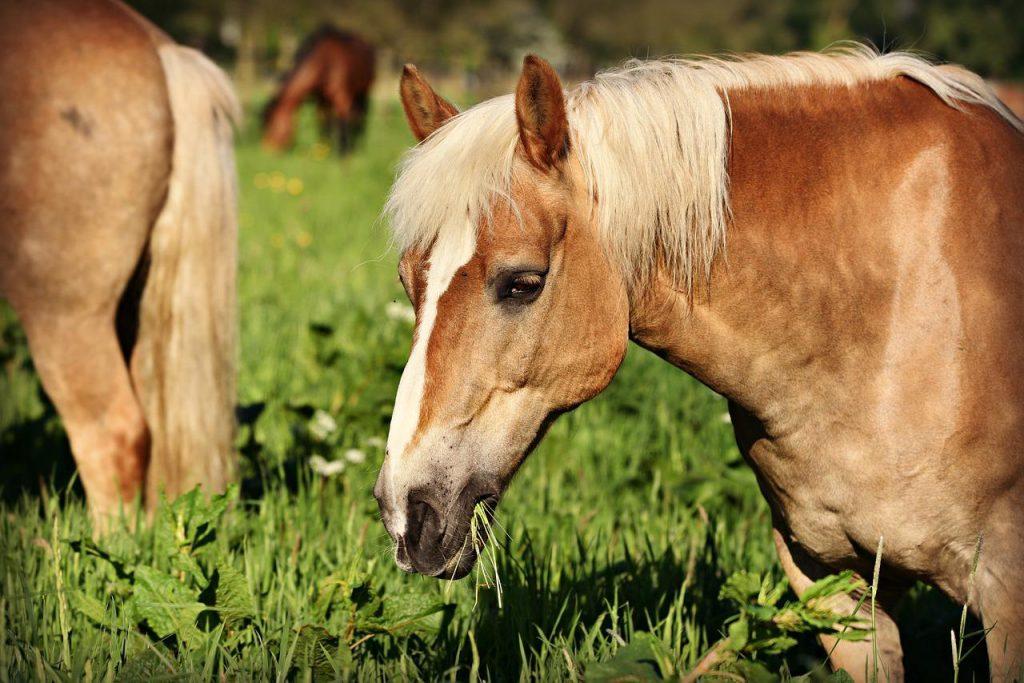 horsefood paardenvoer